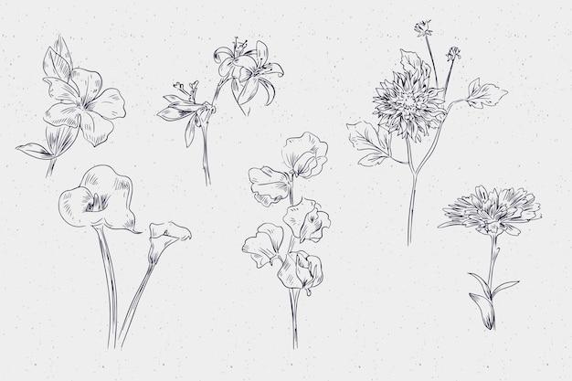 Mão realista extraídas coleção de flores botânica vintage Vetor grátis