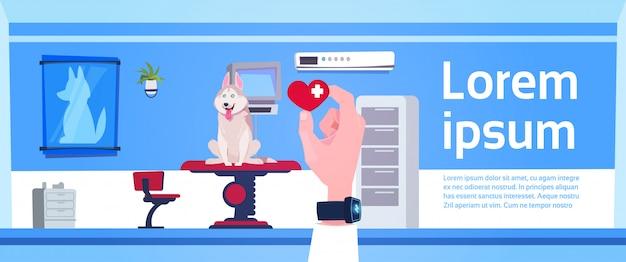 Mão veterinária do doutor que guarda o comprimido sobre o conceito do interior do escritório da clínica do veterinário Vetor Premium