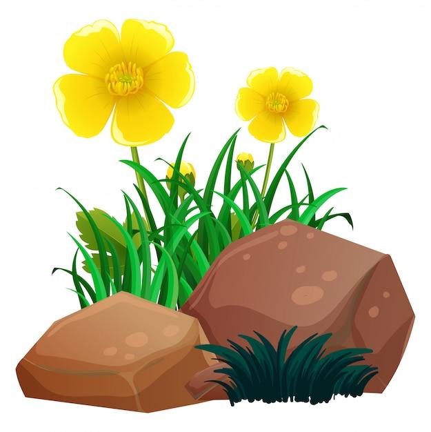 Margarida flores com grama e pedras Vetor grátis