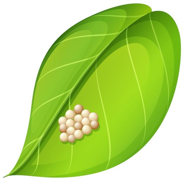 Mariposa ovos na folha Vetor grátis