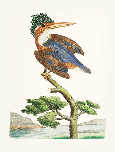 Martim-pescador-de-crista desenhada de mão Vetor grátis