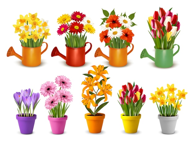 Mega coleção de primavera e verão flores coloridas em vasos e regadores. Vetor Premium