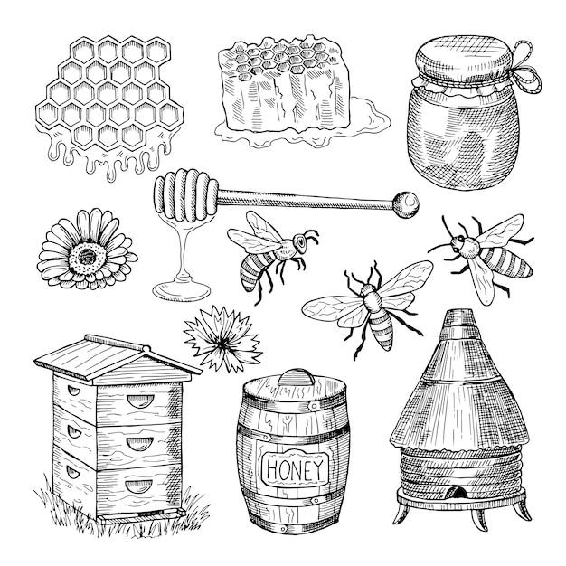 Mel, abelha, favo de mel e outras fotos tiradas tematicamente. vetorial, vindima, ilustração Vetor Premium