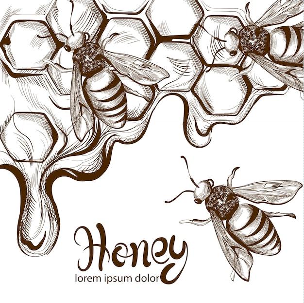 Mel de abelhas pentes linha arte Vetor Premium