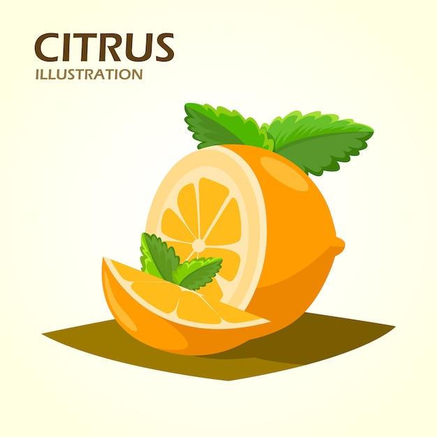 Metades de frutas cítricas e ícone realista de cunhas Vetor grátis