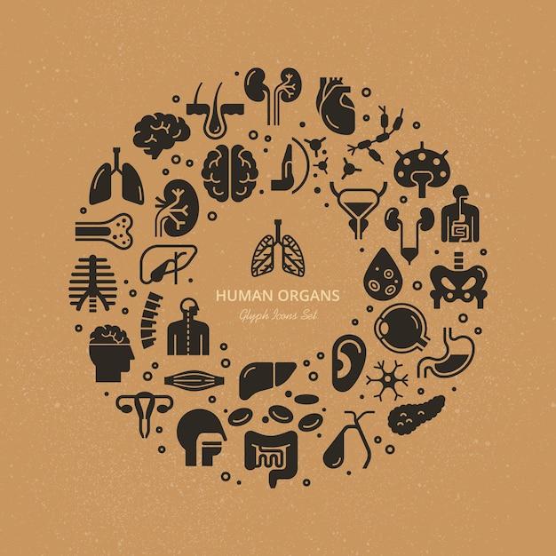 Modelo circular de ícones lineares de órgãos internos humanos e esqueleto sobre um tema médico. Vetor Premium