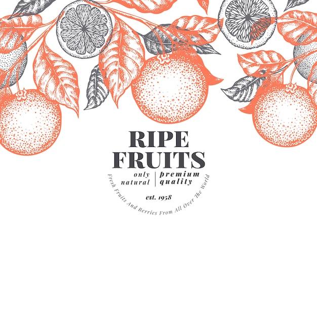 Modelo de design de fruta laranja. ilustração tirada mão da fruta do vetor. banner de estilo gravado. fundo de citrino retrô. Vetor Premium