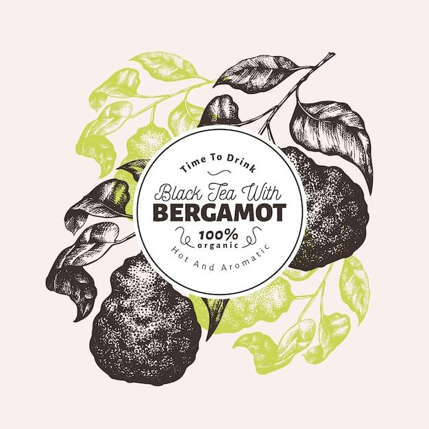 Modelo de design de ramo de bergamota. quadro de limão kaffir. ilustração tirada mão da fruta do vetor. fundo de citrino retrô estilo gravado. Vetor Premium