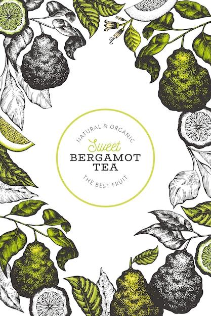 Modelo de design de ramo de bergamota. Vetor Premium