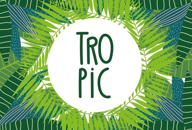 Modelo de layout de folhagem de palmeiras exóticas de folhas tropicais Vetor Premium