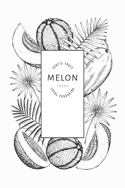 Modelo de melancias, melões e folhas tropicais. mão-extraídas ilustração de frutas exóticas. quadro de frutas de estilo gravado. banner botânico vintage. Vetor Premium