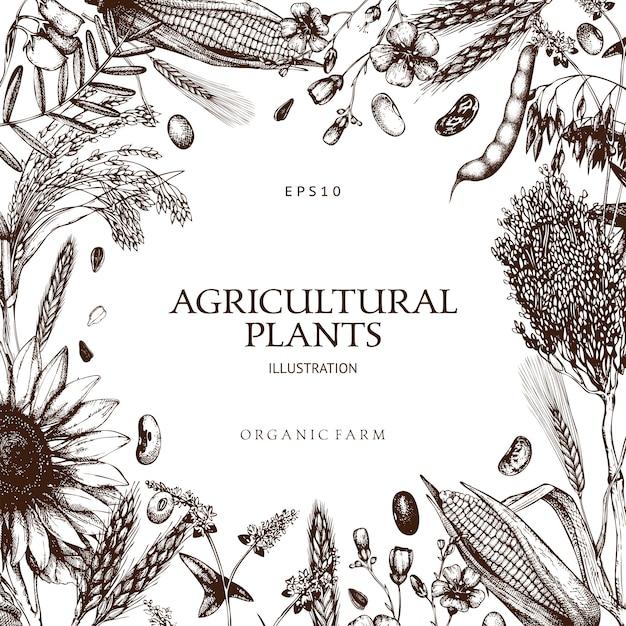 Modelo de plantas frescas e orgânicas de fazenda Vetor Premium