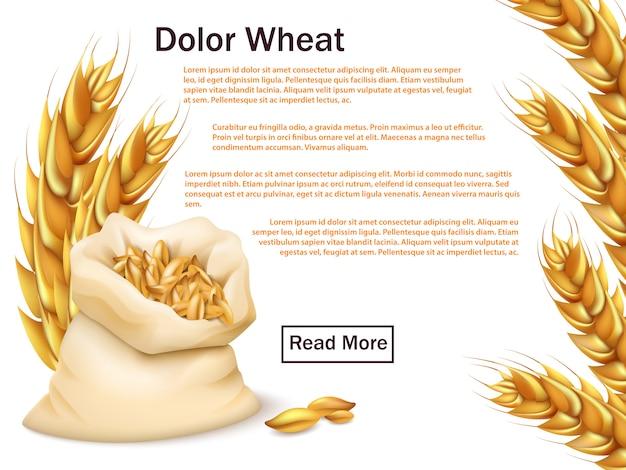 Modelo de publicidade realista de trigo, grãos e orelhas Vetor Premium