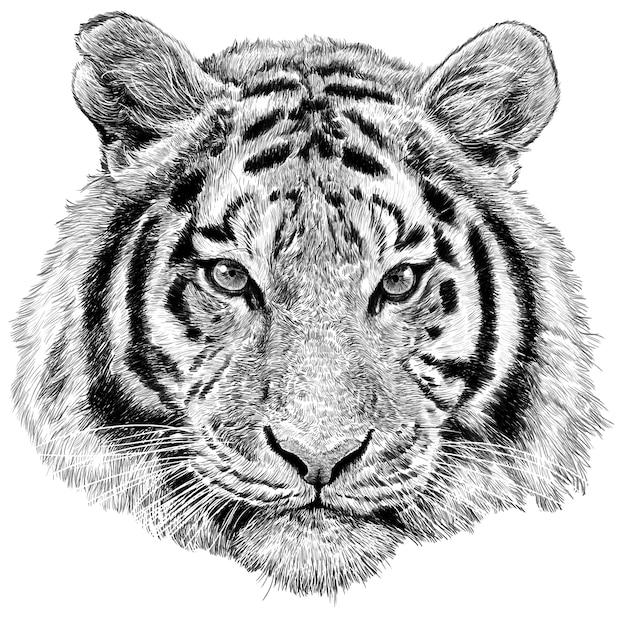 Monocromático da tração da mão da cabeça do tigre monocromático no fundo branco. Vetor Premium