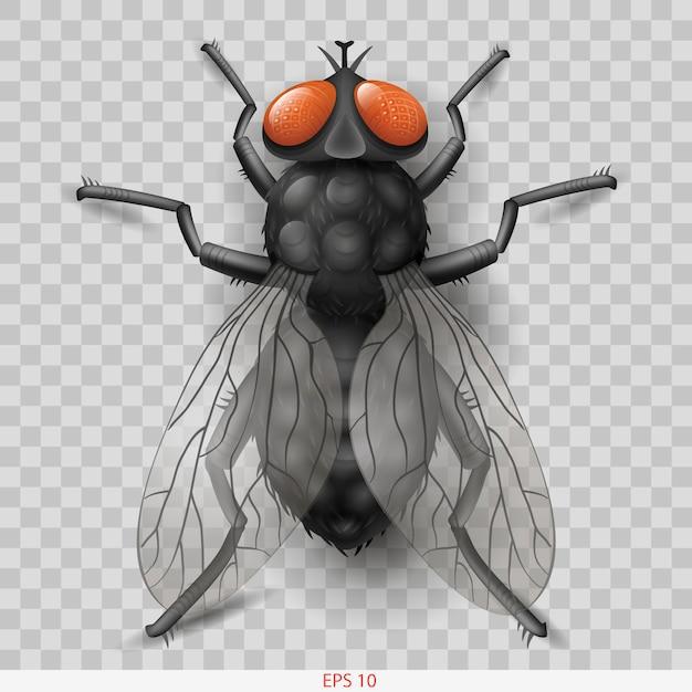 Mosca de inseto realista em vetor Vetor Premium