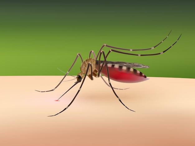 Mosquito chupando sangue Vetor grátis