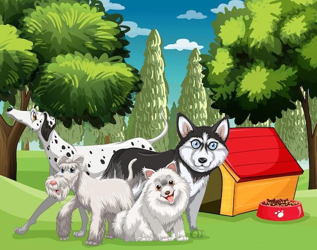 Muitos tipos de cães no parque Vetor grátis