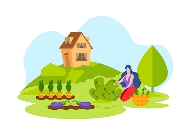 Mulher que escolhe legumes frescos colheita cesta. Vetor Premium