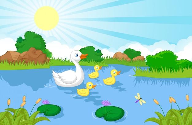 Natação de desenhos animados de família de pato Vetor Premium
