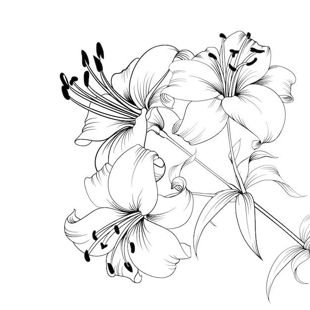 O lírio blooming. Vetor Premium