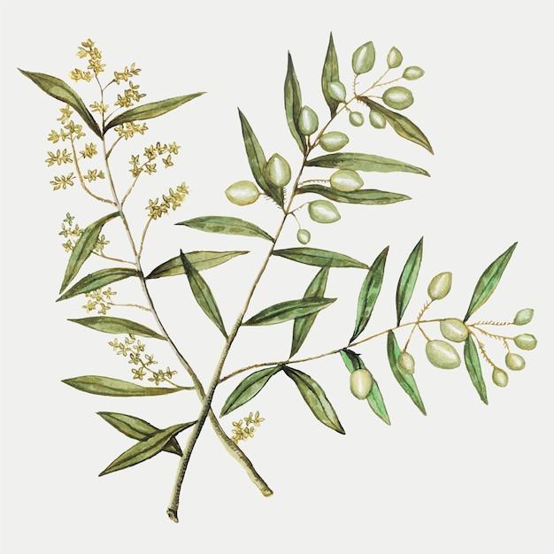 Olive em estilo vintage Vetor grátis
