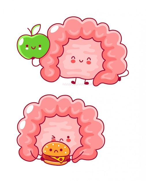 Órgão de intestino humano engraçado feliz bonito. Vetor Premium