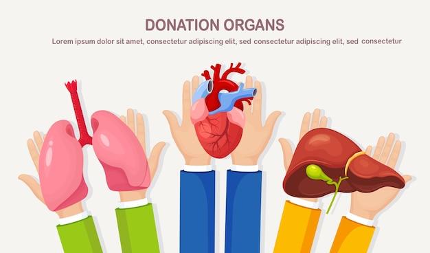 Órgãos de doação. mãos seguram pulmões, coração e fígado de doadores para transplante. ajuda voluntária para paciente Vetor Premium