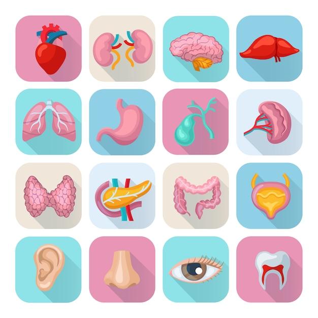 Órgãos do corpo humano saudável plana longa sombra conjunto de ícones Vetor Premium