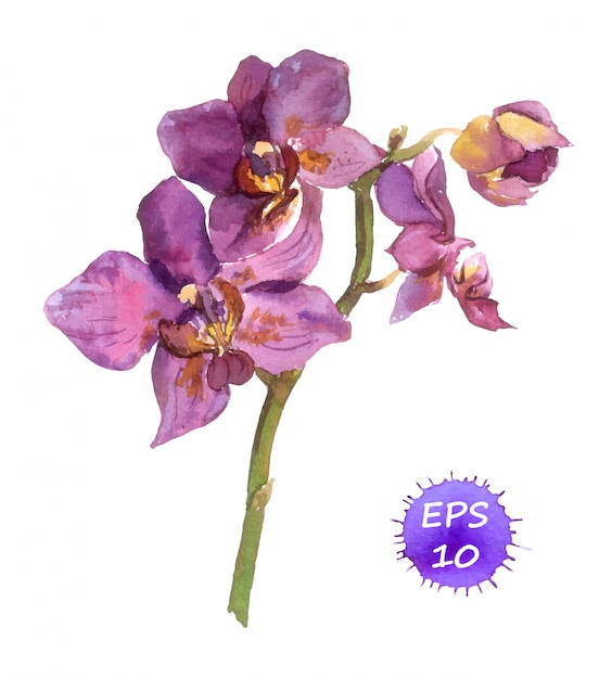 Orquídea pintada em aquarela Vetor Premium