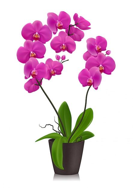 Orquídea roxa em vaso Vetor Premium