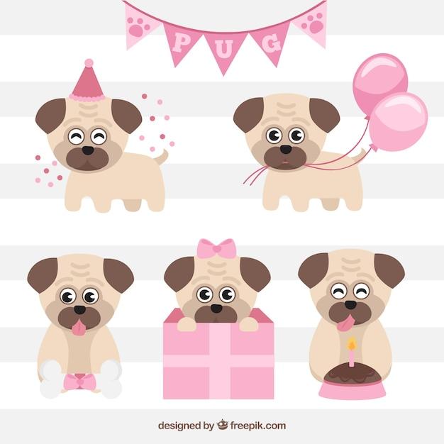 Pacote de aniversário de pugs adoráveis Vetor grátis