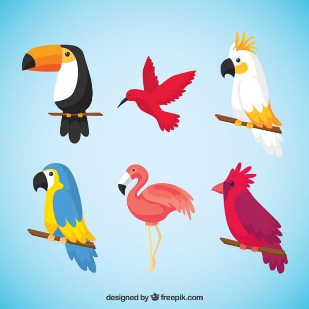 Pacote de aves tropicais Vetor grátis