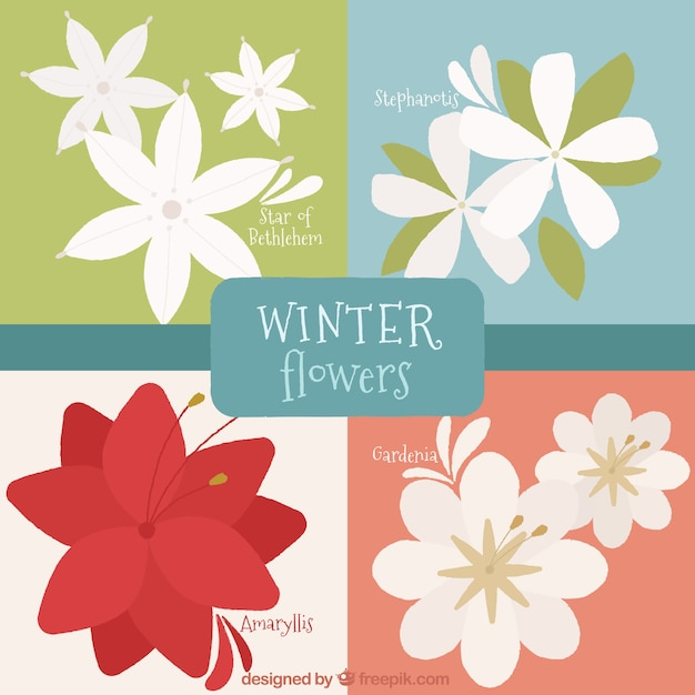 Pacote de flores decorativas de inverno em design plano Vetor grátis