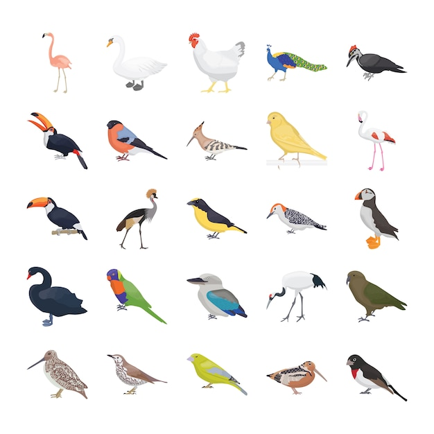 Pacote de ícones de vetor plana de pássaros Vetor Premium