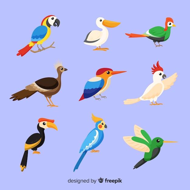 Pacote de pássaros exóticos planas Vetor grátis