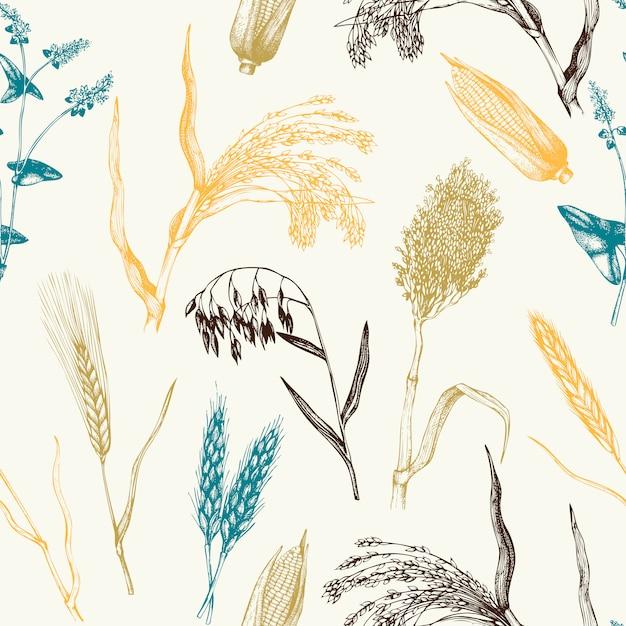 Padrão com mão desenhada culturas de cereais. fundo botânico. Vetor Premium