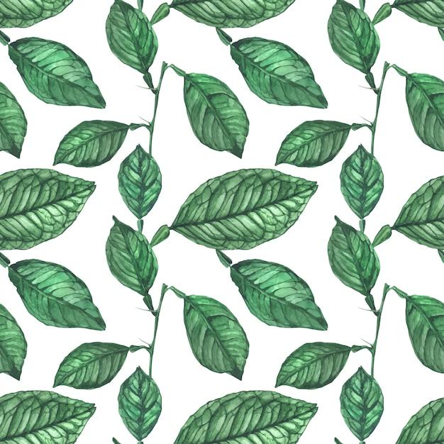 Padrão sem emenda de folhas de limão verde Vetor Premium
