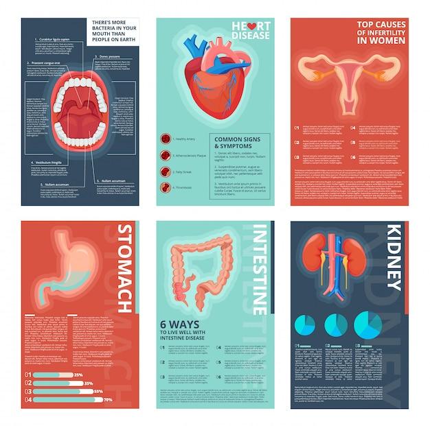 Páginas de infográfico médica. modelo de catálogo de vetor de biologia humana de saúde sistemas digestivos de saúde Vetor Premium