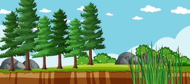 Paisagem vazia em cenário de parque natural com muitos pinheiros Vetor Premium
