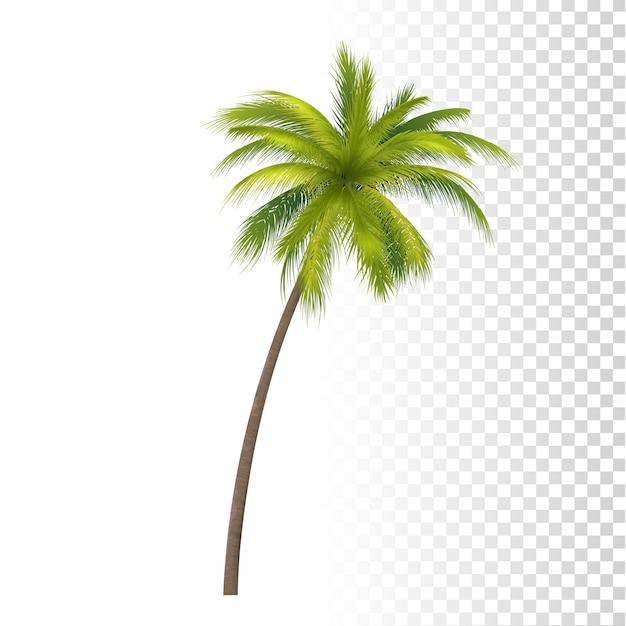 Palma de coco verde Vetor Premium