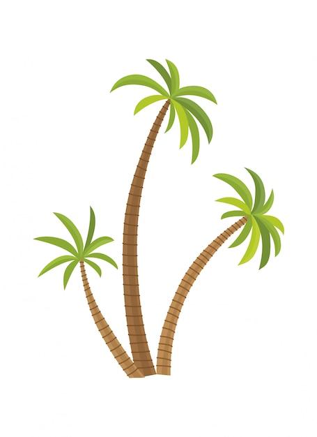 Palmeira da ilustração do vetor isolada. coqueiro. palmeira. turismo, símbolo de viagem, sinal Vetor Premium