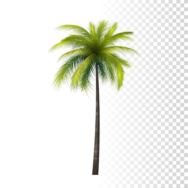 Palmeira de coco Vetor Premium