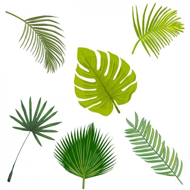 Palmeira deixa colecção Vetor grátis