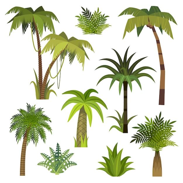 Palmeira dos desenhos animados. palmeiras da selva com folhas verdes, floresta exótica de havaí, vegetação de miami coco palmeiras isolado vector conjunto Vetor Premium