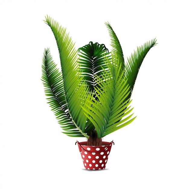 Palmeira no pote isolado Vetor Premium