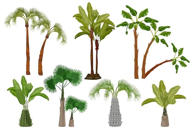 Palmeiras. jardim coleção de plantas tropicais de fotos de desenhos animados de vetor de brasil ou califórnia. palmeira exótica de verão, ilustração tropical de natureza verde Vetor Premium