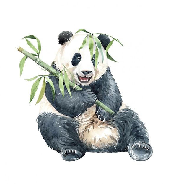 Panda de aquarela comendo bambu Vetor Premium