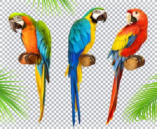Papagaio ara. arara. conjunto de ícones 3d realista de foto Vetor Premium