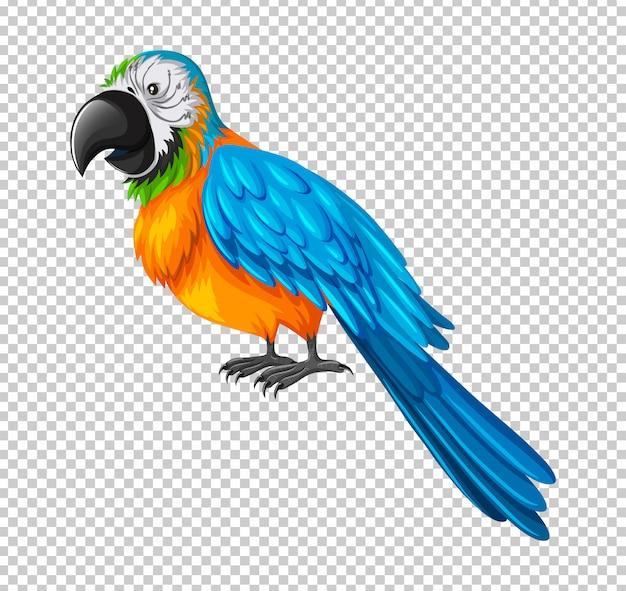Papagaio colorido em transparente Vetor grátis