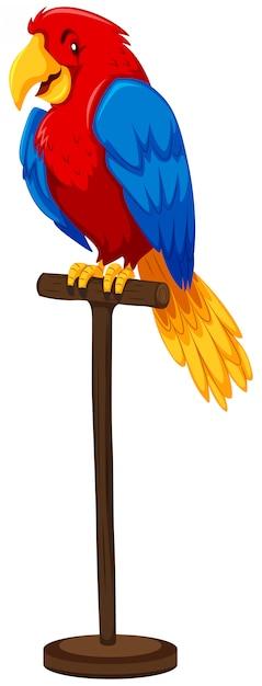 Papagaio com penas coloridas Vetor grátis